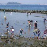 潮干狩りの貝の正しい持ち帰り方法!おいしい食べ方も紹介